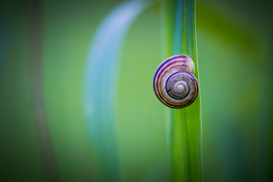 Snail shell on grass leaf. Beautiful nature macro, useful as background