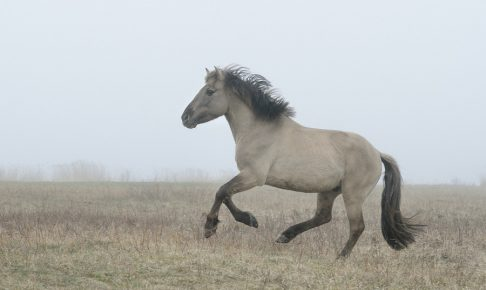 horse running in fog