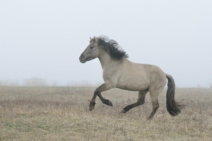 horse running in fog
