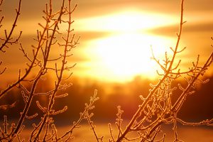 frost on tree at the lake shore at the sunrise. Silhouette