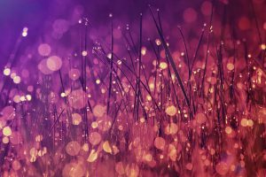 Nature background. Morning dew on the grass in marsala color