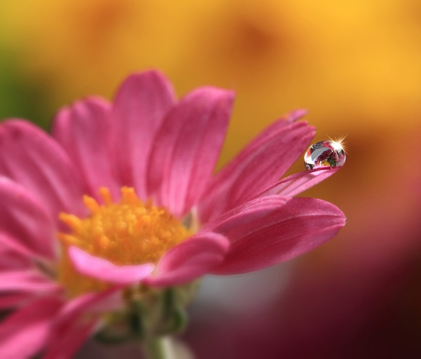 A single water drop on the petals of a flower