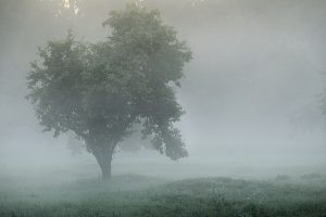 Mystical tree silhouette in fog