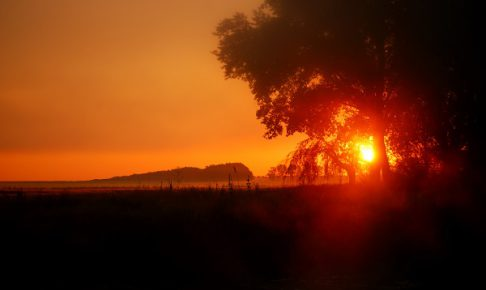 tree silhouette at the field against colorful red sunrise in fog