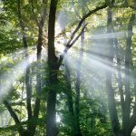 Strong beautiful fog and sunbeams in the forest